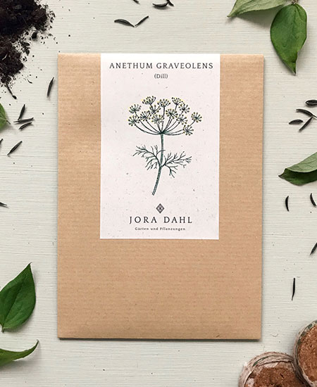 ANETHUM GRAVEOLENS / DILL /